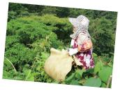 採集した桑を運ぶおばちゃん